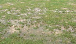 芝生が傷む