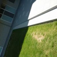 芝生の根腐れ改善